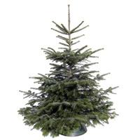 Weihnachtsbaum-Shop